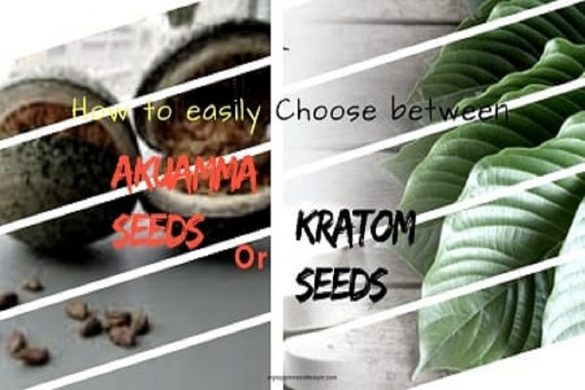 Akuamma Seeds or Kratom Seeds