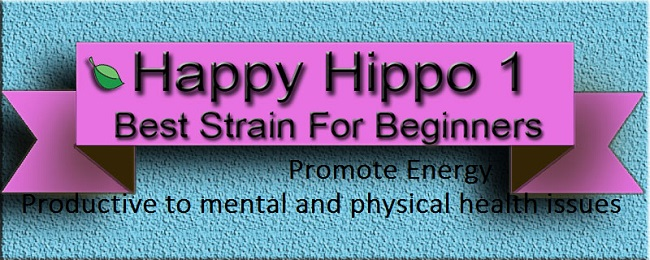 Happy Hippo Products